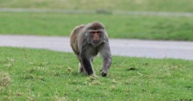 """""""I'm being attacked by Monkeys!"""" …When Monkeys Attack…Bands of feral rhesus monkeys finding homes all over Florida..Viral video"""