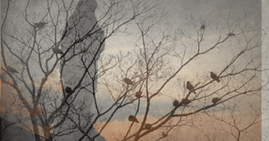 Birds go Silent on Apparition Hill – Haunts Atheist Doctor Investigating Visionaries …Converts to Catholicism