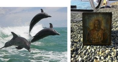 Man on beach sees the impossible.12 Dolphins Return Icon of the Virgin Mary (Respected Orthodox Christian Media Report)