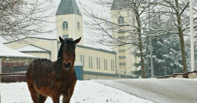 Horse Mysteriously Shows Up at St. James Church in Snowy Medjugorje…Praying for Horse Lover Wayne Weibel?