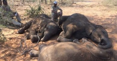 "(Disturbing Images) 90 Elephants Found Dead ""I'm shocked, I'm completely astounded. The scale of elephant poaching is by far the largest I've seen or read about anywhere in Africa to date,"""