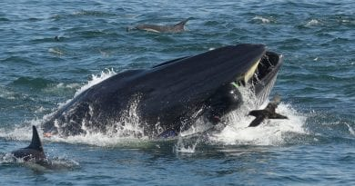 Modern Day Jonah!- Diver survives after being scooped up in whale's mouth off South Africa