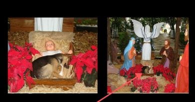 Abandoned German Shepherd Seeks Warmth and Comfort in the Cradle of Our Lord at Nativity Scene